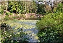 NO3901 : Retting Pond, Silverburn Park, Leven by Bill Kasman