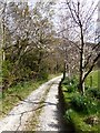 NY4521 : Spring blossom on the driveway up to Swarthbeck by Oliver Dixon