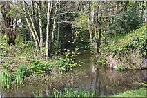 ST2896 : Tributary, Monmouthshire & Brecon Canal by M J Roscoe