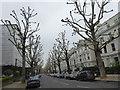 TQ2480 : Pollarded trees in Holland Park. by Marathon