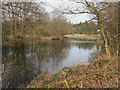 TL8293 : Lynford Lake from North side by David Pashley