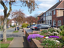 SO9096 : Front gardens in Penn, Wolverhampton by Roger  Kidd