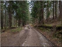 NH5966 : Evanton Community Woods by valenta