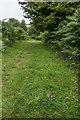 SO4674 : Meadow Saffron (Colchicum autumnale) by Ian Capper