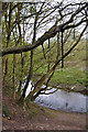SP3677 : Steep drop to the River Sowe near the railway viaduct, Willenhall, southeast Coventry by Robin Stott