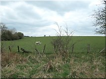 NZ1824 : Sheep and a lamb, south-west of Lutterington by Christine Johnstone