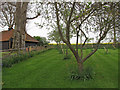 TQ6299 : Footpath through Small Orchard, nr Brook Cottage, Fryerning by Roger Jones