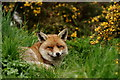 TQ3643 : British Wildlife Centre by Peter Trimming