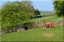 SK2572 : Pony in field beside Bar Road by David Martin