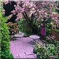 SK3284 : A pink suburban garden by Graham Hogg
