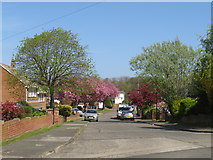 NZ3955 : Spring colour on Lambourne Road, Sunderland by Malc McDonald