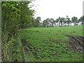 NT0541 : Pasture near Middle Mains by M J Richardson