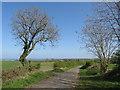 NZ3951 : Country lane near Ryhope by Malc McDonald
