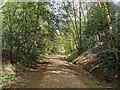 TQ2434 : Path in Buchan Country Park by PAUL FARMER