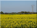 NZ3751 : Pylons through a rape field near Sunderland by Malc McDonald