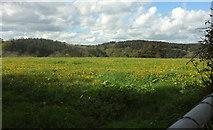 SX8281 : Field above Great Rock Farm by Derek Harper