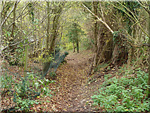 TQ2156 : Bridleway towards Walton Downs by Robin Webster