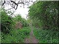 TQ6591 : Green Lane (Byway), Little Burstead  by Roger Jones