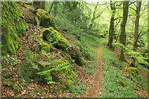 SX8281 : Path through Greatrock Copse #2 by Derek Harper