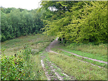TQ2652 : Path towards Nut Wood by Robin Webster