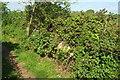 ST4217 : Hidden vehicle, South Petherton footpath by Derek Harper