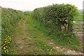 SX4473 : Green lane near Honeytor by Derek Harper