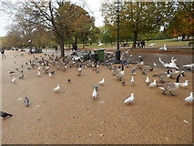 TQ2780 : Birds in Hyde Park by Hamish Griffin
