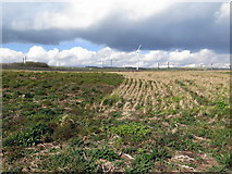 NT9955 : Stubble grassland near Ramparts Business Park by Andrew Curtis