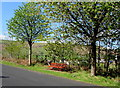 SO1305 : Roadside bench between trees, Abertysswg by Jaggery