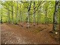 NH9954 : Darnaway Forest by valenta