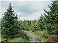 NT2438 : Path through trees of Cademuir Plantation by Trevor Littlewood