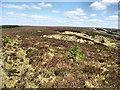N2300 : Expanse of Heathland by kevin higgins