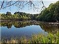NH9258 : Loch Loy by valenta