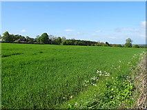 SJ3654 : Field off Hoseley Lane by JThomas