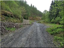SJ0036 : Junction of tracks in Coed Ty'n-y-fron by David Medcalf