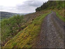 SJ0036 : Forest track in Coed Ty'n-y-fron by David Medcalf