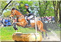 ST8182 : Badminton Horse Trials, Gloucestershire 2019 by Ray Bird
