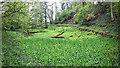 SE6298 : Valley Garden, Bransdale by Mick Garratt