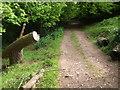 ST5173 : A damaged stump by Neil Owen