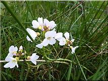 H4483 : Wild plants, Ballynatubbrit by Kenneth  Allen