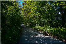SS5628 : North Devon : Country Lane by Lewis Clarke