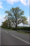 SP5968 : Tree by Watling Street near Watford Gap by David Howard