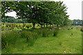 SN6552 : Ceredigion hill pasture south of Llanddewi Brefi by Roger  Kidd