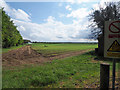 TL9096 : Carrot crop being irrigated in STANTA by David Pashley