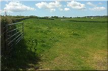 SS5726 : Field west of Chapelton by Derek Harper