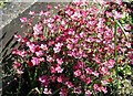 TG2408 : Pink flowers on a grave in Section O by Evelyn Simak