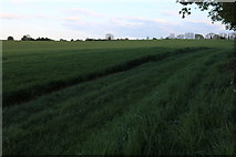 SP6654 : Field by Watling Street, Pattishall by David Howard