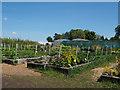 TL7897 : Didlington Nursery by David Pashley