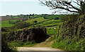SS5424 : Sheep near Delley by Derek Harper