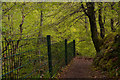 NC8301 : Footpath in the Big Burn, Golspie, Sutherland by Andrew Tryon